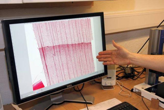 MØNSTER I MIKROSKOP: Ved å forstørra små treprøvar i mikroskop opp til 500 gonger kan treekspertane studera strukturen og kvar minste celle i treet.