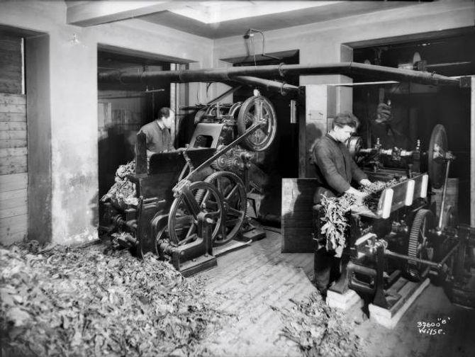 FABRIKK: M. Glotts Tobakkfabrikk produserte tobakk i Kristiania/Oslo i perioden 1895– 1948. Glotts største suksess var sigarettmerket «Speed». Her ser du tobakksarbeidarar ved fabrikken i 1925.