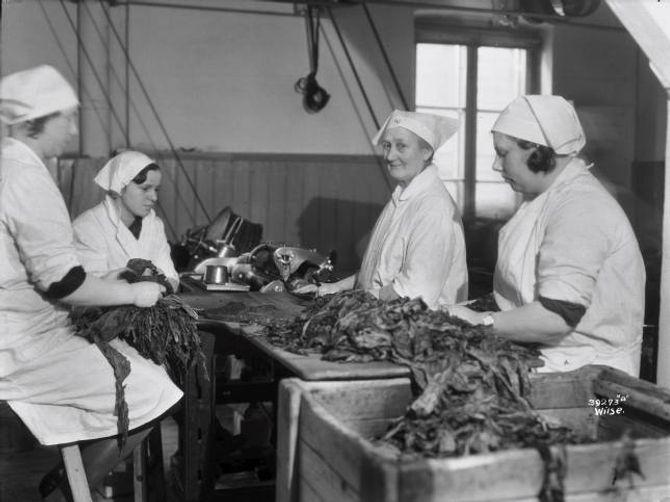 KVINNEYRKE: Etter år 1900 var det fleire kvinner enn menn i tobakksindustrien, og kvinnelønningane låg over snittet for kvinner i industrien elles. Her ser du kvinner i arbeid ved Conrad Langaards tobakksfabrikk, rundt 1932.