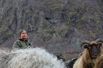 GIR OPP: Sauebonde Gro Agnethe Nybøinnser at ho ikkje får dei seks fastgåtte dyra ned frå fjellet.