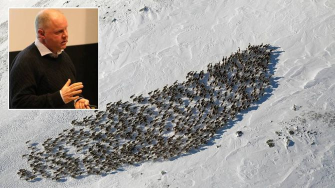 SANERING: Veterinær Bjørnar Ytrehus (innfelt) tok også i januar under informasjonsmøtet om CWD til orde for å sanera ut villreinbestanden i Nordfjella sone 1 (hovudbiletet). Arkivfoto