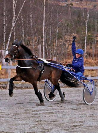 HESTESAMLING: Det var ein stor samling på 30 hestar som møtte til løp.