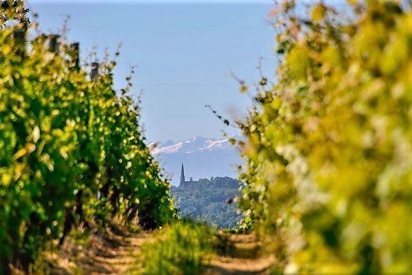 Saint-Mont med Pyreneene i bakgrunnen.