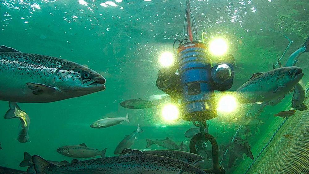 Cyberfish: Med to kameraer og fire LED-lys er det mulig å se det meste av det som skjer i en laksemerd med full skarphet. Riggen drives framover av en vannjet. Snart skal det installeres ytterligere to kameraer på riggen.
