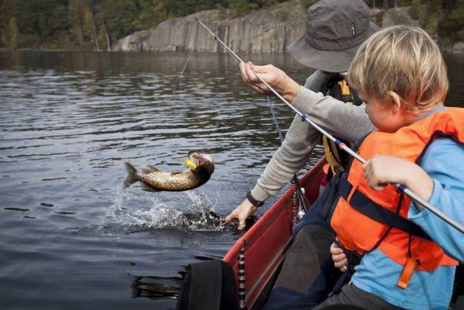 FISKESPRETT: Mellom 1. januar og 20. august kan barn fiske overalt i ferskvatn gratis, unntatt i elvar som har laks, sjøaure og sjørøye. Mor og far må kjøpe fiskekort.