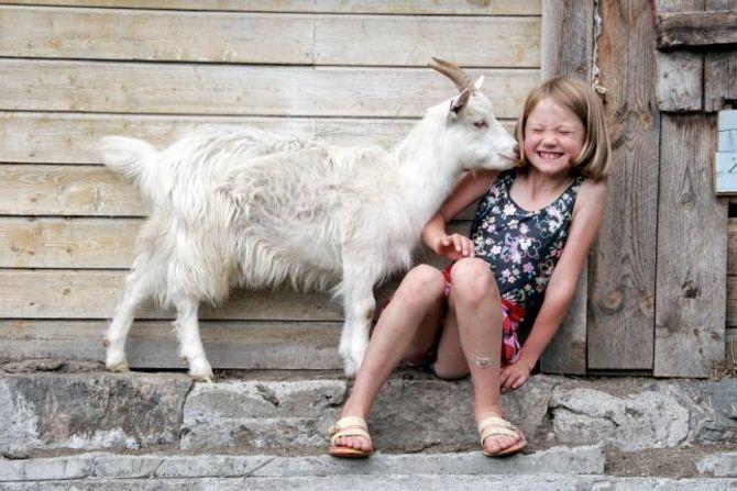 GEITELYKKE: På fjellet kan barna få nærkontakt med beitande kyr, sauer, hestar og geiter. Fleire stader er det tilbod om variantar av seterferie med overnatting og rom for å delta i aktivitetane på setra.