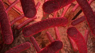 Her er teknologiene som kan forhindre at antibiotikaresistens blir den verste helsekatastrofen siden svartedauden