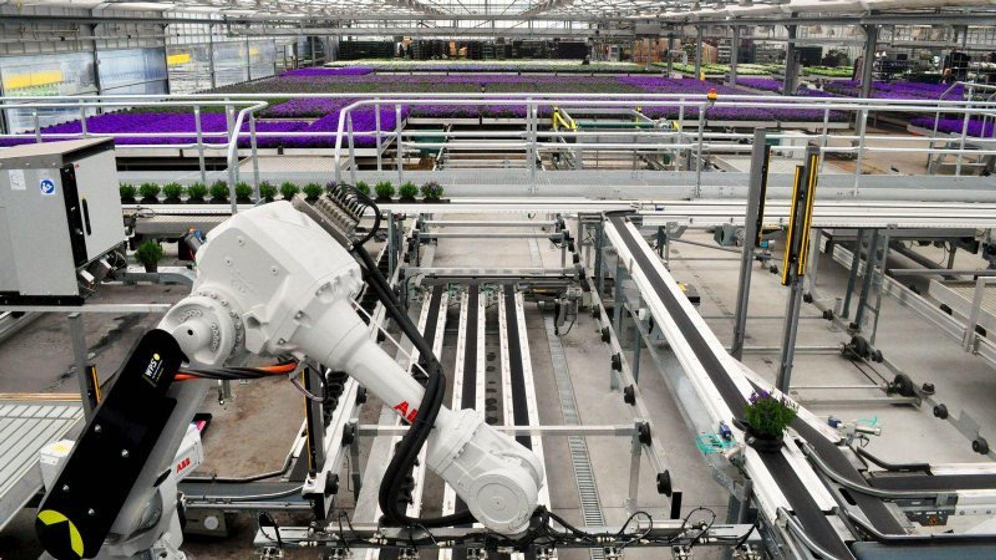 Det nye kombinerte robotanlegget med visuell kontroll hos Gartneriet PKM kan håndtere og sortere opptil 50.000 blomster i døgnet. Ifølge gartneriet er anlegget det første i sitt slag i Danmark. Inspirasjonen har PKM primært fått fra Holland, hvor leverandøren også kommer fra.