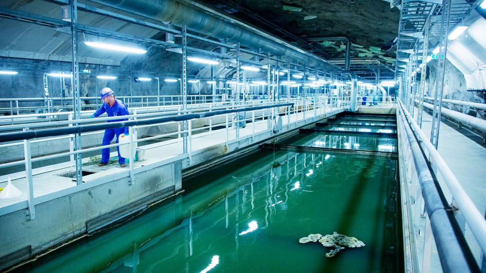 Avløpsvann behøver ikke være en belastning. Med riktig teknologi kan det gjøres om til en vannressurs. Her henter en forsker  vannprøver fra Bekkelaget renseanlegg i Oslo. Illustrasjonsbilde: KYRRE LIEN/VG