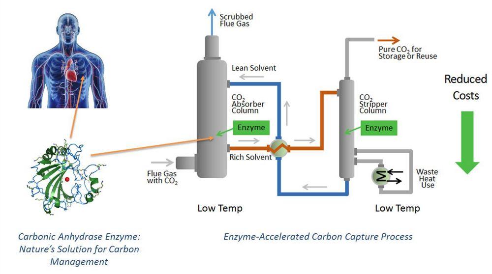 Enzymkatalysert CO2-fjerning: Naturen har jobbet med CO2-fjerning i over en milliard år og kommet frem til en særdeles effektiv og lite energikrevende prosess.