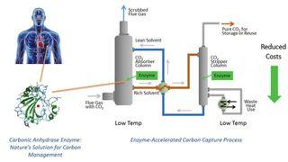 De trekker CO2 ut av avgasser ved hjelp av naturens egen metode