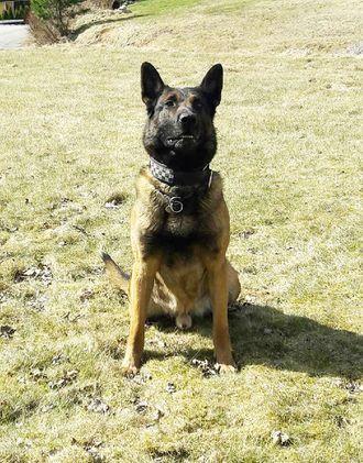 Politihunden Tim skal ha blitt slått i hodet og sparket flere ganger.