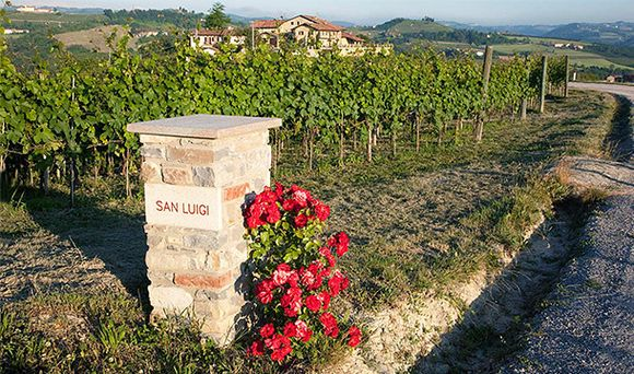 Fra Sanm Luigi-vinmarken i Dogliani.