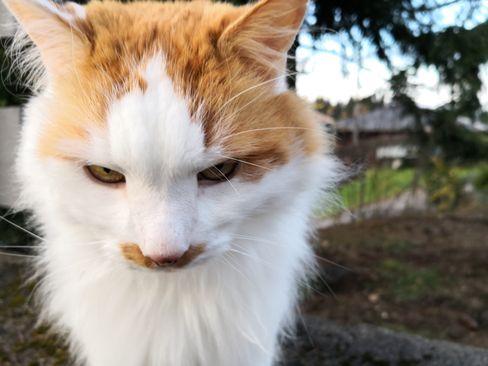 Kameraet i Mate 10 Pro gjør en solid jobb under de fleste forhold. Selv dette nesten umulige bildet av en katt som egler seg innpå ble rimelig skarpt og pent.