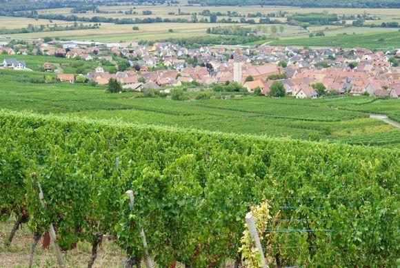 Pfaffenheim ligger i den sørlige delen av Alasace.