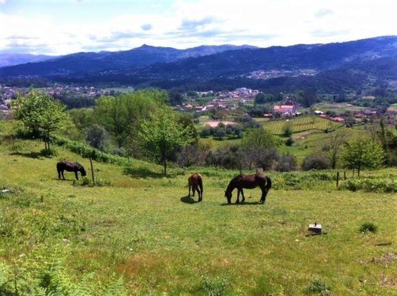 Quinta Casal do Paço er drevet biodynamisk siden 2006.