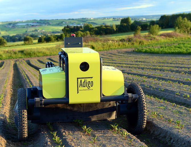 Robotene kommer: Den norskutviklede roboten Asterix til Adigo i aksjon på et rødbetjorde. Foto: Adigo.