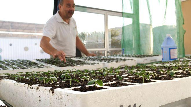 Midt i ørkenen i Jordan forsøker Frank fra Stavanger å dyrke agurker til markedspris