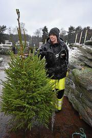 GRØNT ER SKJØNT: Kristoffer Neset pakket ut omtrent seksti grantrær sist onsdag i regnværet. Her viser han frem en vanlig gran som passer fint til mindre leiligheter.