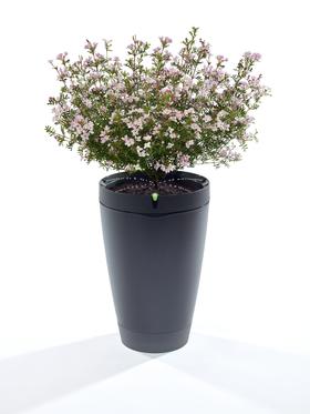 Også blomsterpotten kan kobles til smarthus-anlegget.