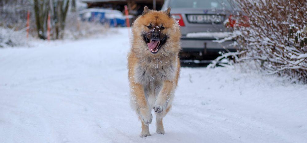 Kameraet klarer seg fint på motiver i rask bevegelse, som så ofte ellers testet på undertegnedes hund i fult firsprang. 1/1000s - f/2.0 - ISO 200. Behandlet fra råformat. Filmprofil «Astia».