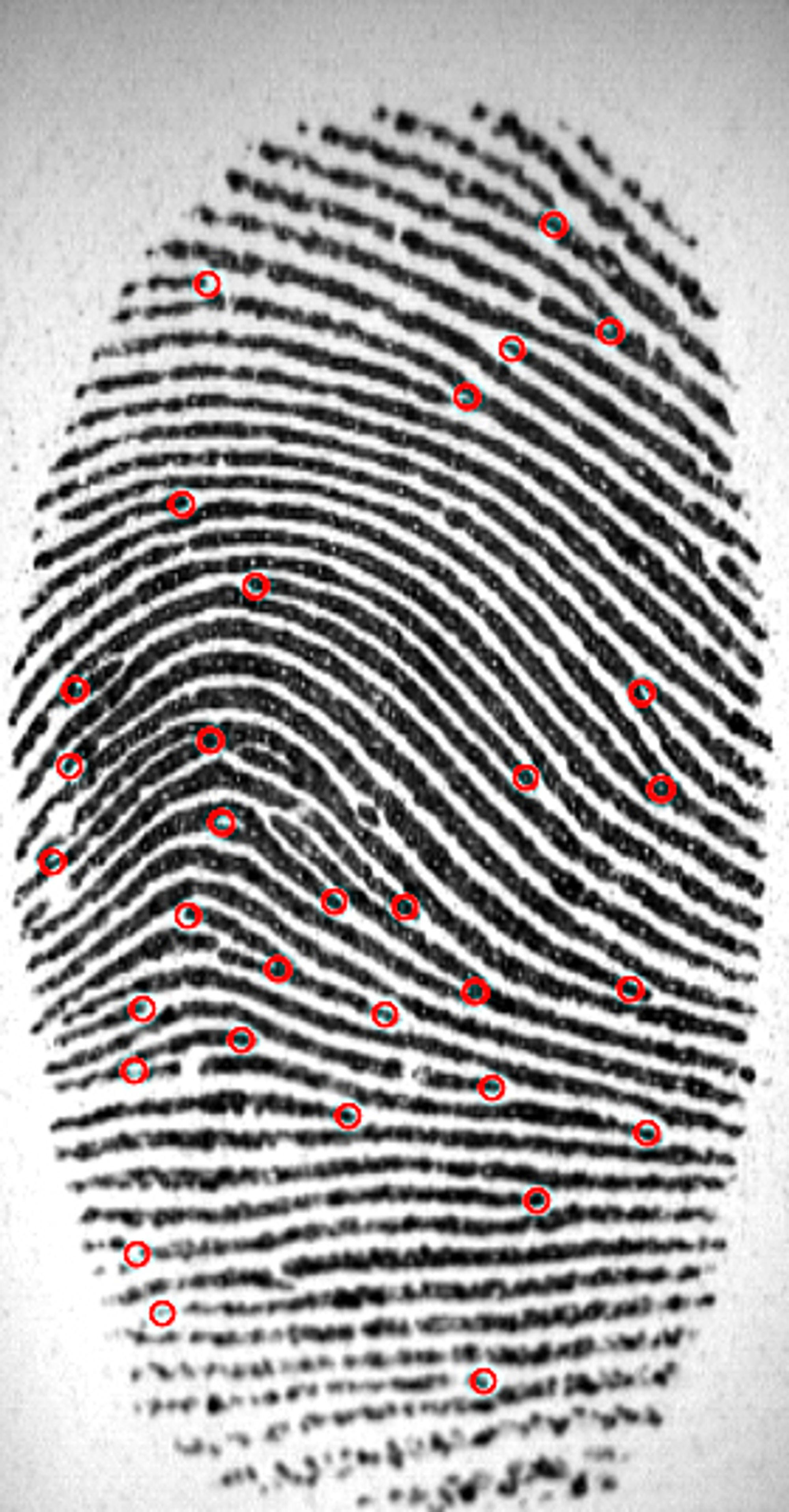Bildet viser hvordan Guoqian Li kartlegger hvordan linjene i et fingeravtrykk smelter sammen, og skiller lag. Disse punktene er markert med rødt og gir langt større treffsikkerhet enn å bare å se på mønsteret linjene danner.