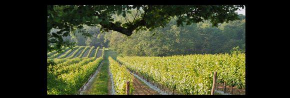 Fra Domaine Horgelus' vinmarker.