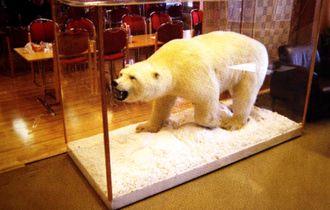 Den eneste isbjørnen å observere, sto utstilt i kantinen ved Svea-gruven.