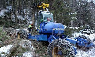 Vidar Dalbak feller et tre som er for grovt for maskinen. Maskinfører Roar Nyvoll hjelper til med å felle treet i ønsket retning.