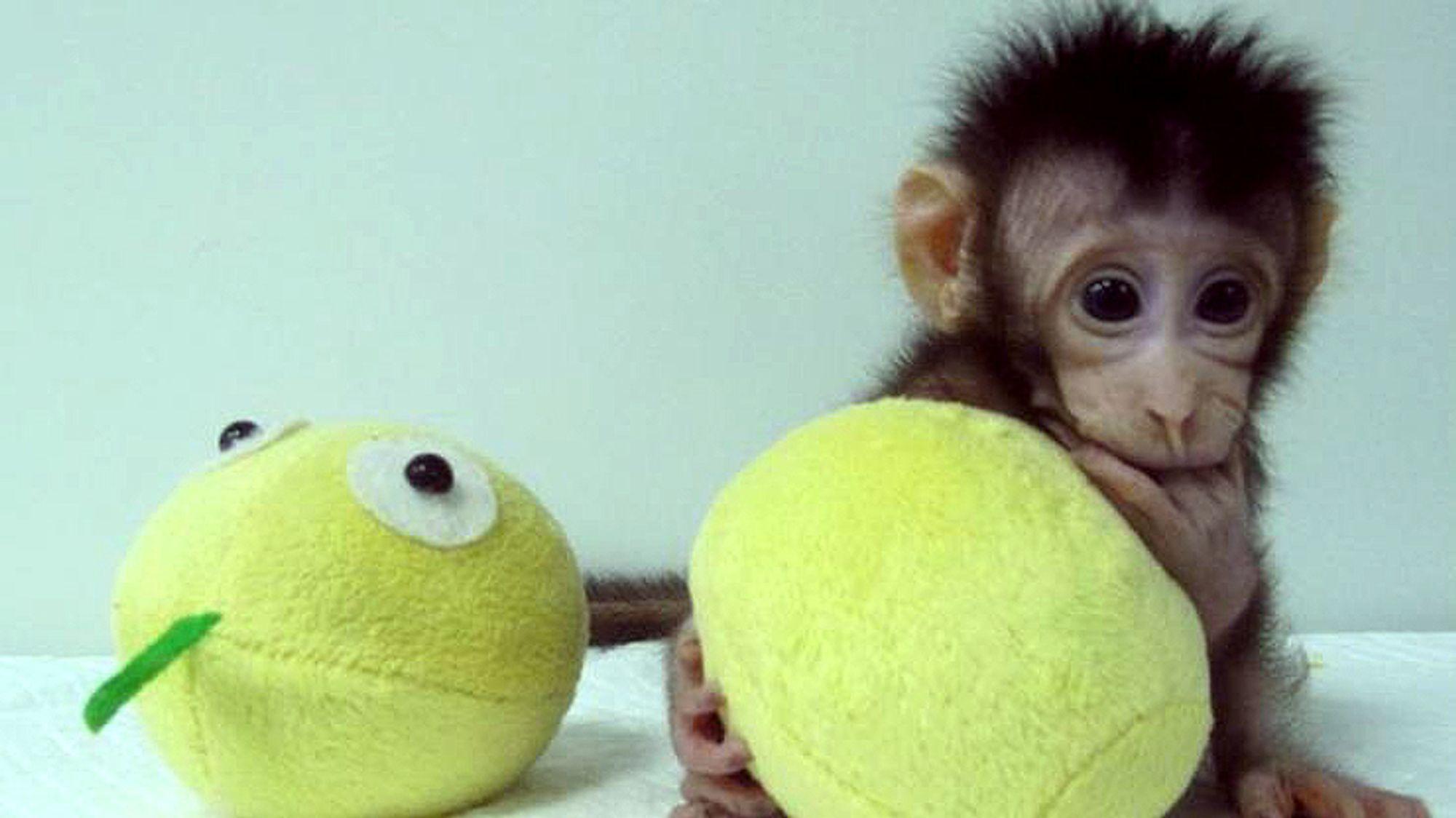 Kina investerer kraftig i biotek-forskning, og det har allerede gitt resultater med klonede aper.