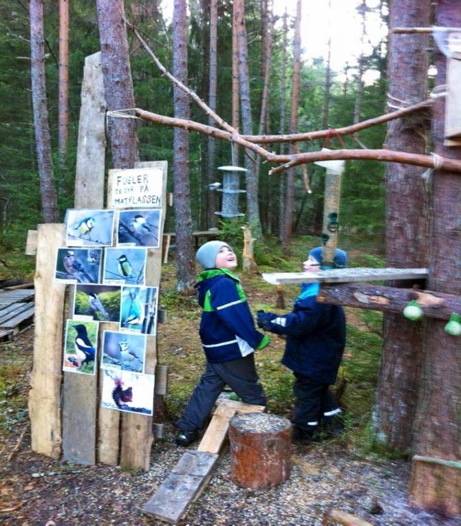 Fugleplassen i skogen.