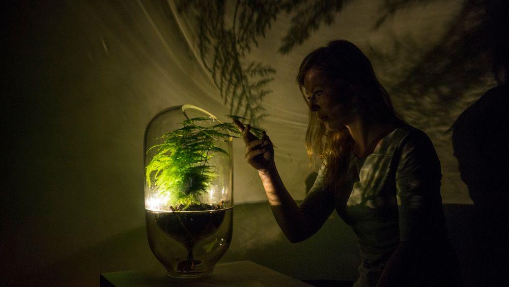 Ermi van Oers er gründer av Living Lights, som lager lamper som drives av fotosyntesen.