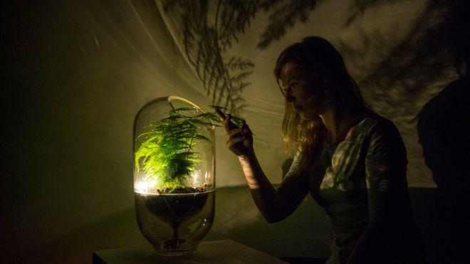 Hun lager lamper som drives av fotosyntesen
