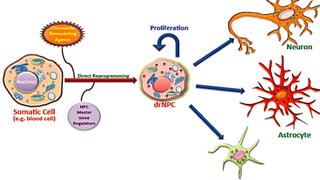 Håper å kurere Parkinsons og nakkebrudd med ny stamcelle-teknologi