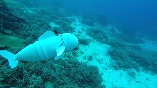 Robotfisken SoFi svømmer med stimen mens den måler forurensning