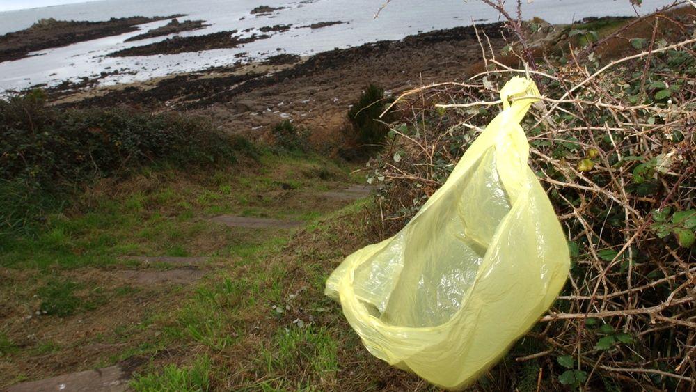 Ulike nedbrytbare plastposer brytes ned til ulike bestanddeler.