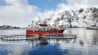 Kystbåten «Ballstadøy» losser levende torsk til merd på Ballstad i Lofoten.
