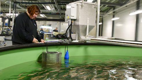 Begrenset: Røkting av settefisk ved Nofimas anlegg i Tromsø. Der produseres en svært begrenset mengde med settefisk av torsk i påvente av at kommersielle aktører vil starte produksjon.