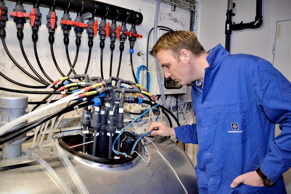 Fôringsanlegget for berggyltlarvene har de ansatte hos Marine Harvest på Stord utviklet selv blant annet ved å ta i bruk ståltanker fra gårdsmelkeanlegg.