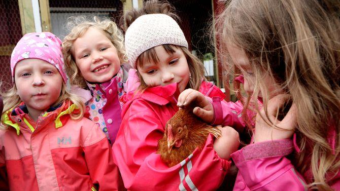 I Vollen barnehage i Bodø har de skaffet seg fem høner. Daglig leder Ann-Hilde Hansen og de to pedagogiske lederne Lill-Merethe Sveggen og Birgitte Nordby.