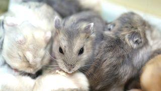 Stoff i blodet til norske drapsmenn gjorde mus mer voldelige