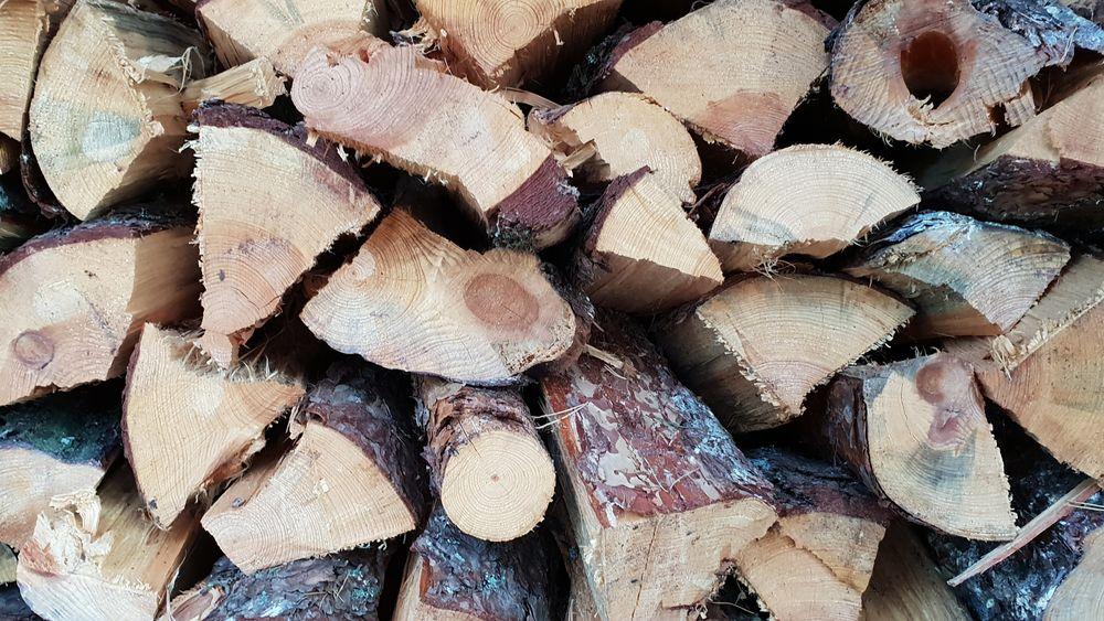 Drivstoff fra skogen: Biodrivstoff kan henes fra mange kilder, men den norske skogen kan bidra med svært mye for å redusere klimautslipp