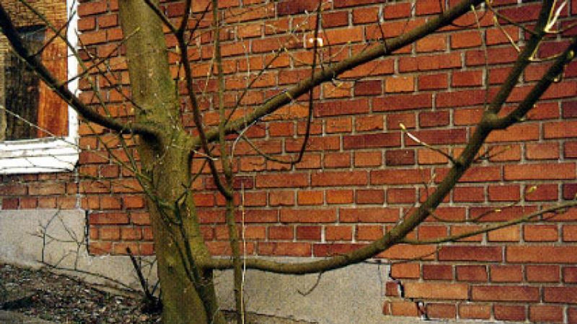 Boligeiere på særlig Vestfyn og Østjylland opplever at det plutselig oppstår sprekker i husene deres. Årsaken er at husene er fundamentert på fet leire som er svært vannholdig. Den langvarige sommervarmen får trær og busker til å suge opp mer vann fra grunnen, og det kan få leirlagene til å komprimeres, slik at det oppstår sprekker i husene over.