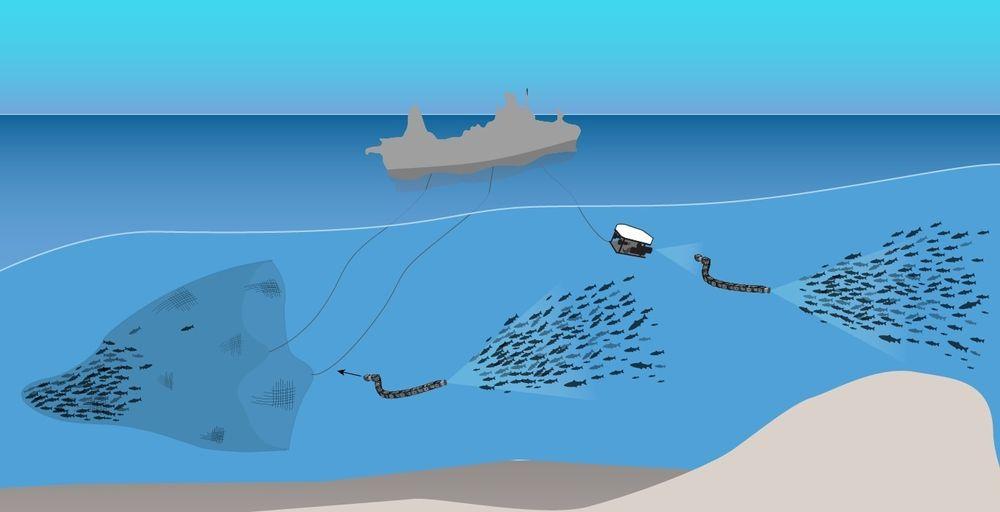 Sintef Ocean leder EU-prosjektet Smartfish. Det strekker seg over fire år og skal utvikle og teste smart teknologi for overvåking og selektering før og under fangst.