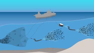 I fremtiden skal fiskebåtene kun fange de fiskene som er bestilt