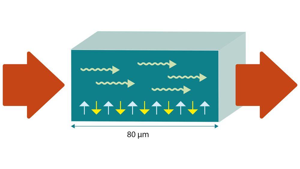 Spinnstrømmen settes i gang med et elektrisk felt i den ene enden av materialet, en antiferromagnet. I antiferromagneten er det spinn som veksler mellom den ene eller den andre retningen (gule og blå piler). Signalet sprer seg som en bølge (grønne piler) gjennom antiferromagneten. I den andre enden av materialet overføres spinnstrømmen til en elektrisk strøm igjen.