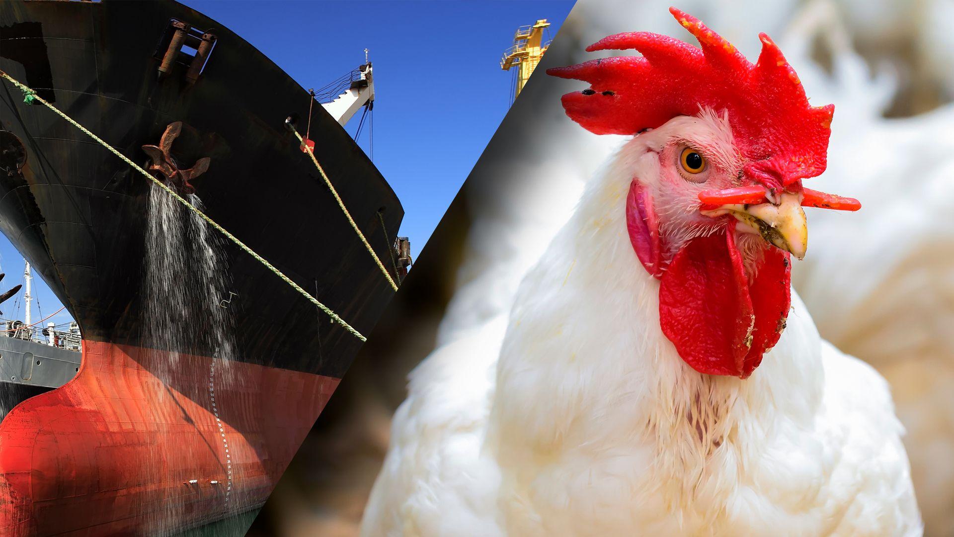 ANNONSE: Hva har bunnstoff til felles med fuglefôr?