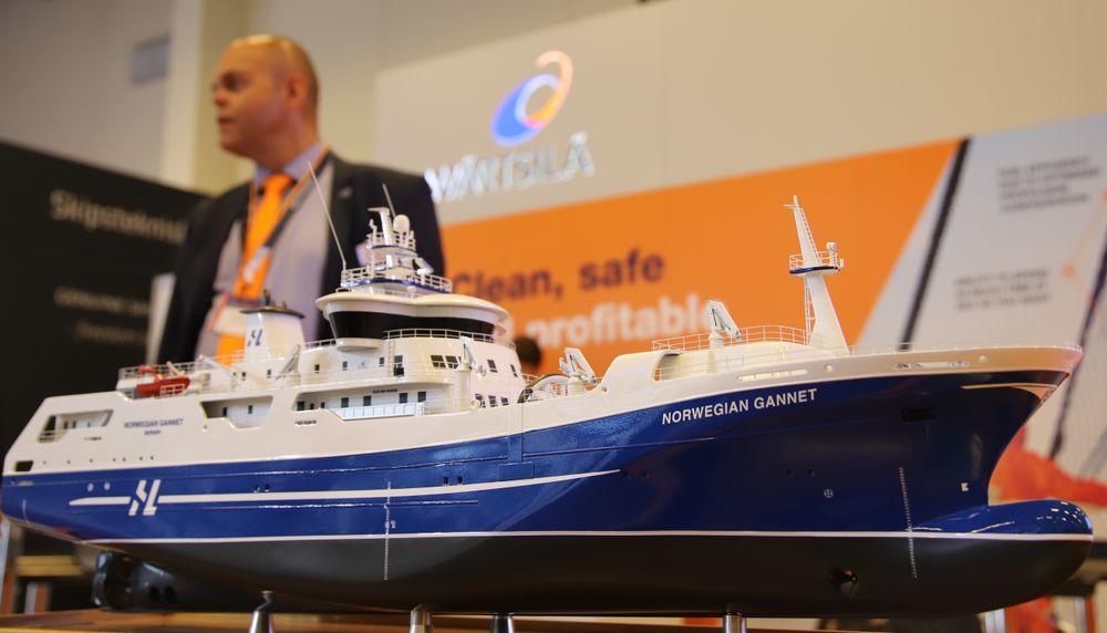 Norwegian Gannet er snart klar til å frakte sløyet fisk til fileteringsfabrikk i Danmark.