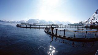 Sjekk topp 100-listen: Norges mest lønnsomme oppdrettsselskaper