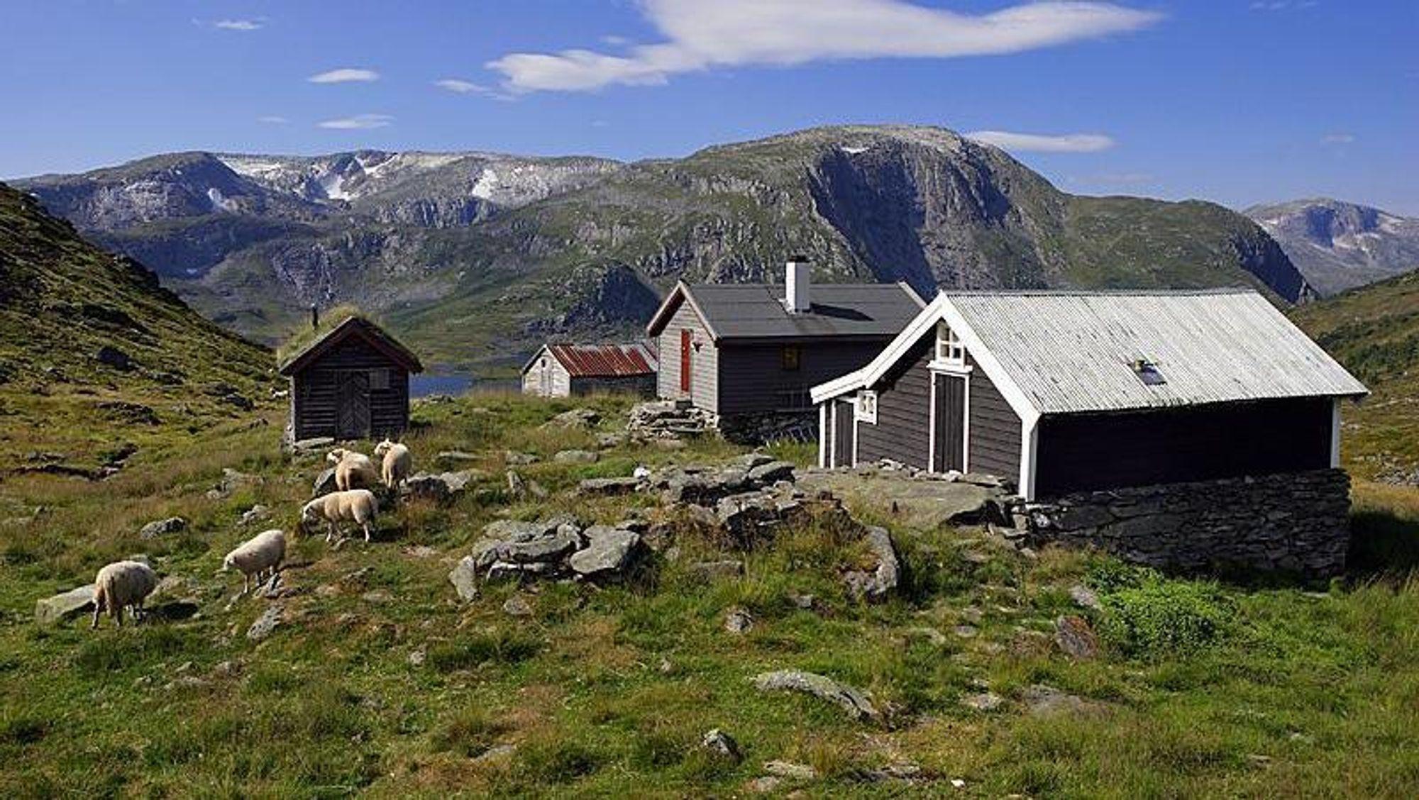 Foto fra Stølsheimen, som er fjellområdet mellom Sognefjorden i nord og Vossefjellene i sør, fra Masfjordfjellene i vest og Vikafjellet i øst. Her planlegges det massiv vindutbygging.